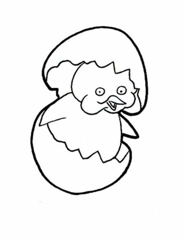 Baby Chick, : How to Draw Hatching Baby Chick Coloring Page