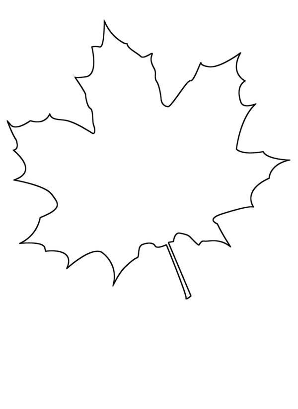 Maple Leaf, : How to Draw Maple Leaf Coloring Page