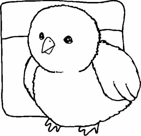 Baby Chick, : Kids Drawing of Baby Chick Coloring Page