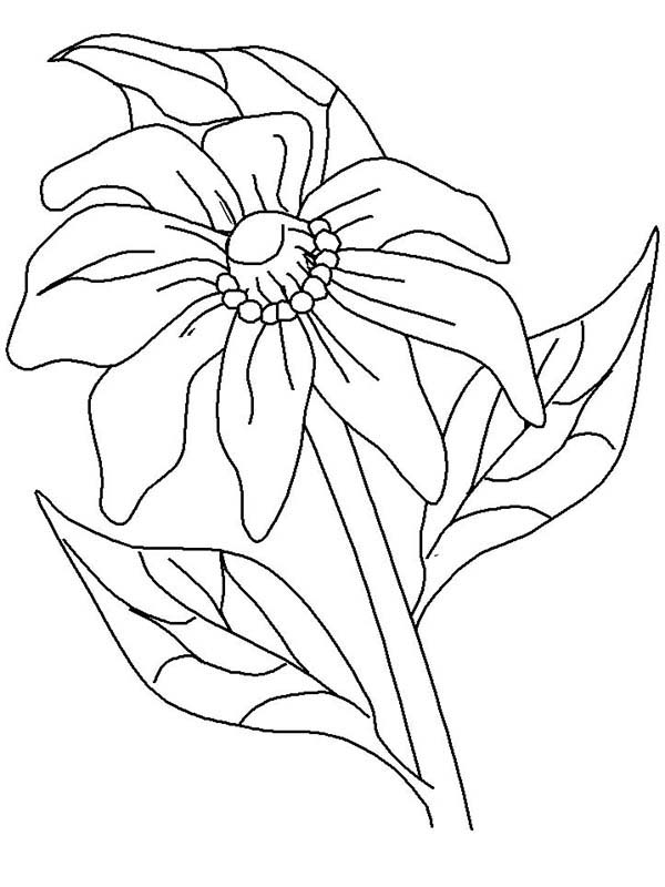 California Poppy, : Kids Drawing of California Poppy Coloring Page