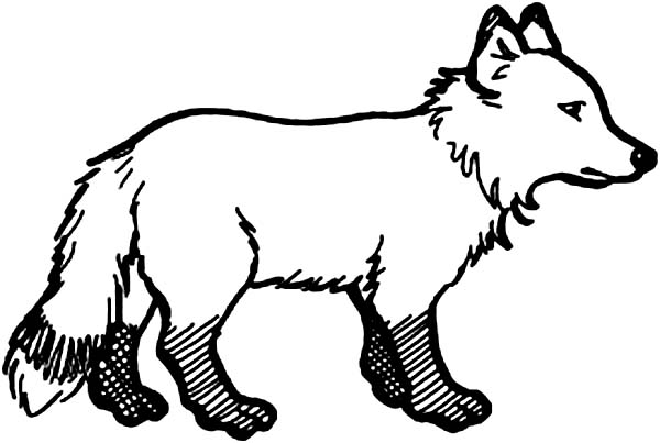 baby arctic fox coloring pages - photo #25