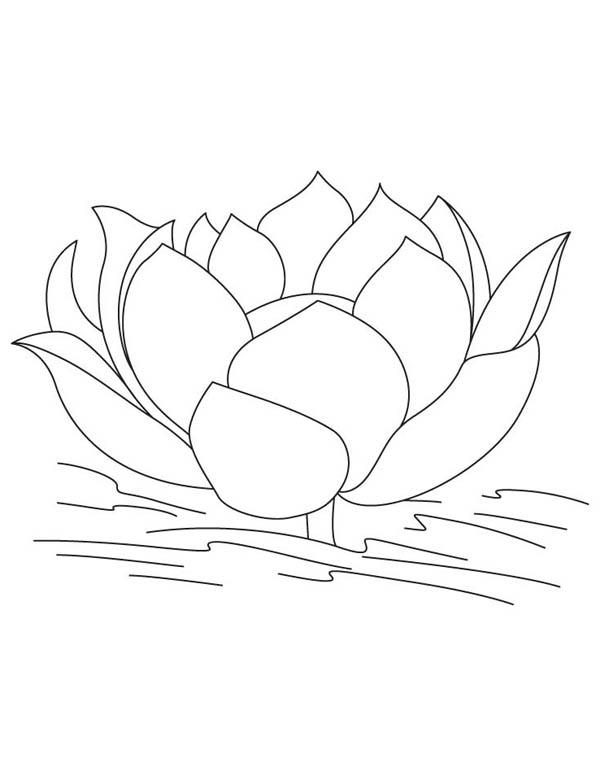 Lotus Flower, : Lotus Flower Image Coloring Page