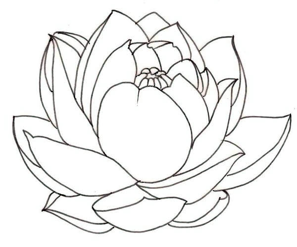 Lotus Flower, : Lotus Flower is a Symbol of the Sun Coloring Page