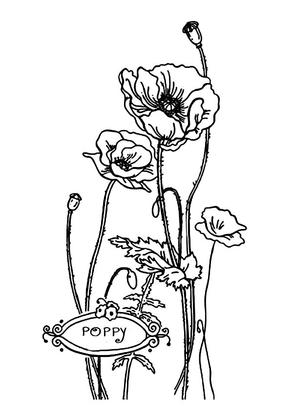 California Poppy, : Lovely California Poppy for Valentine Day Coloring Page