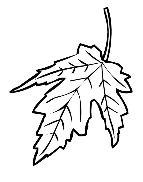 Maple Leaf, : Maple Leaf Falling from Tree Coloring Page