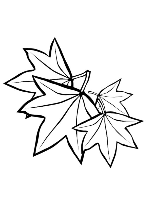Maple Leaf, : Maple Leaf Image Coloring Page