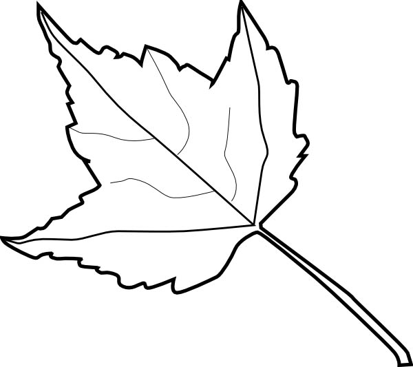 Maple Leaf, : Maple Leaf Outline Coloring Page