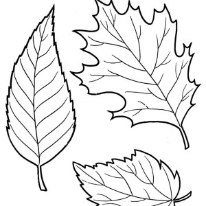 fall leaves images coloring pages syria war military photos delta