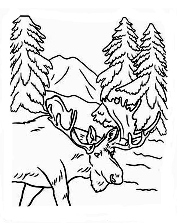 Moose, : Moose Entering Forest Coloring Page