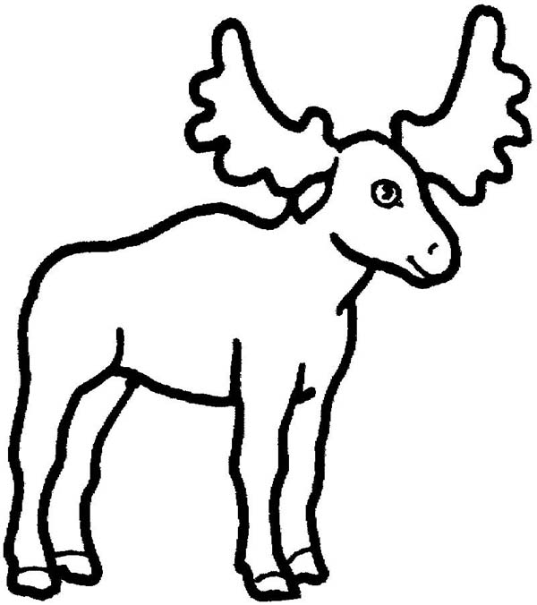 Moose, : Moose with Big Eye Coloring Page