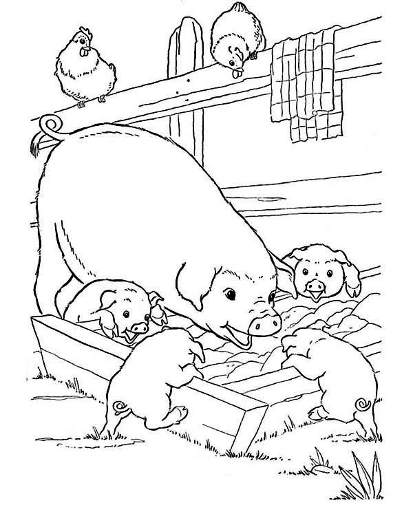 Coloring Pages Of Baby Animals And Mom Mother Pig Her Babies Are Eating On