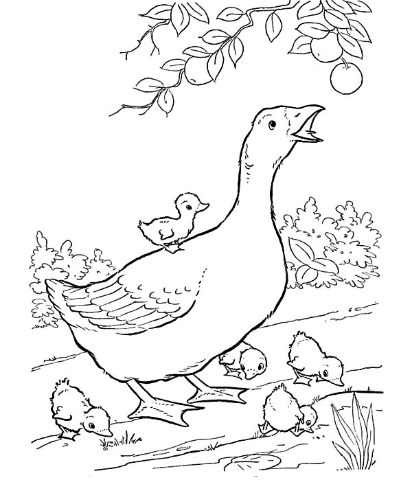 Farm Animal, : Mother of Goose Try to Reach Fruit in Farm Animal Coloring Page