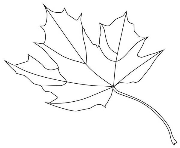 maple leaf norway maple leaf coloring page