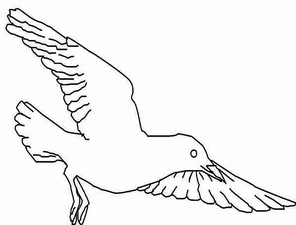 Seagull, : Pacific Seagull Coloring Page