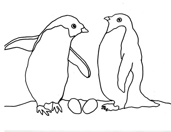 Arctic Animals, : Penguin Couple in Arctic Animals Coloring Page
