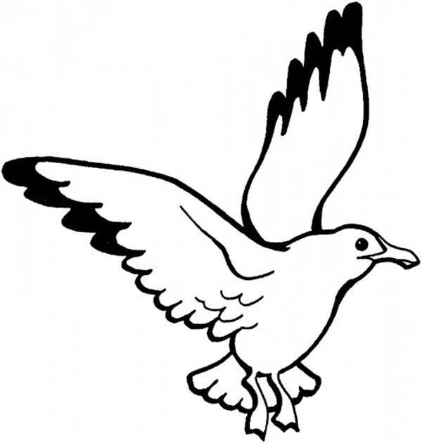 Seagull, : Picture of Seagull Coloring Page