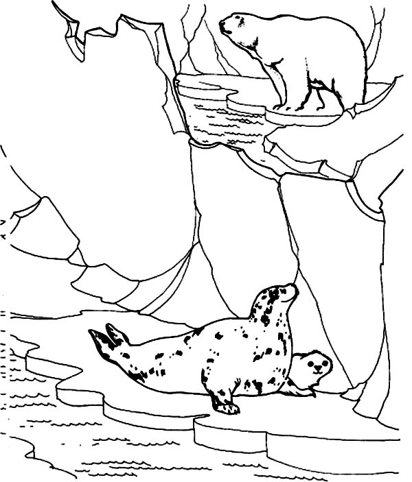 Arctic Animals, : Polar Bear Hunt Seals in Arctic Animals Coloring Page