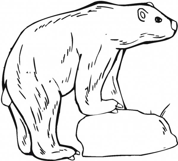 Arctic Animals, : Polar Bear Standing on Ice in Arctic Animals Coloring Page
