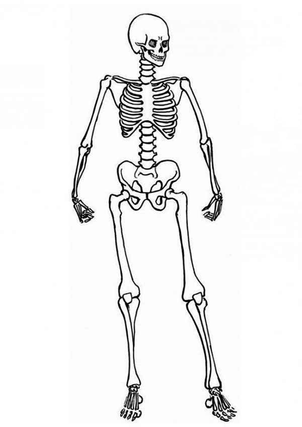 Skeleton, : Posing Skeleton Coloring Page