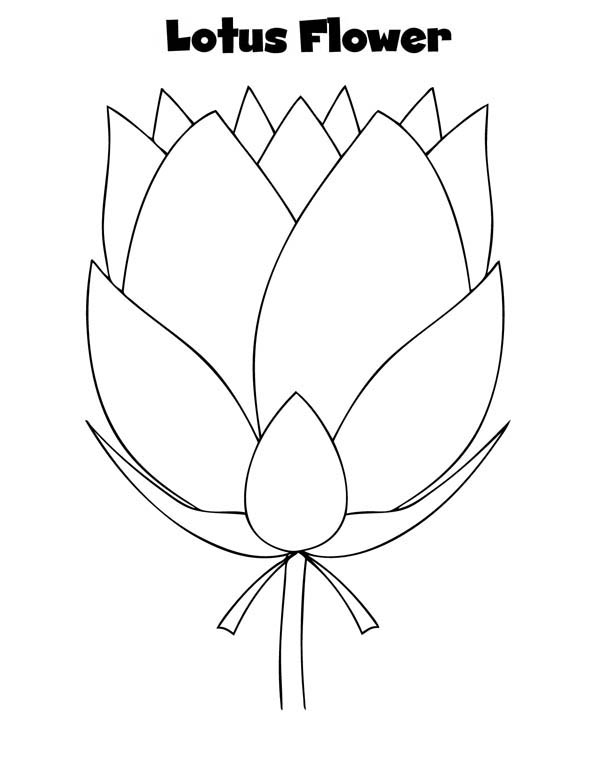 Lotus Flower, : Preety Lotus Flower Coloring Page