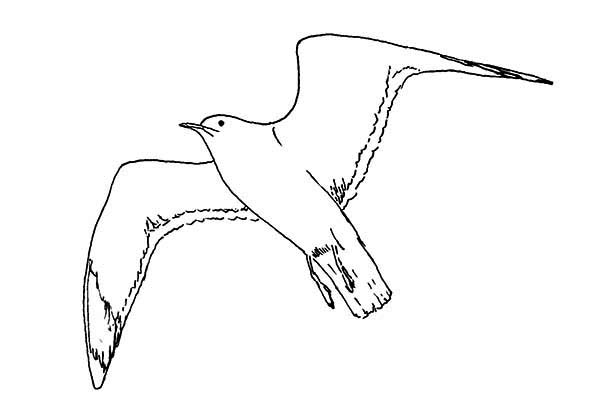 Seagull, : Seagull Hunting for Food Coloring Page