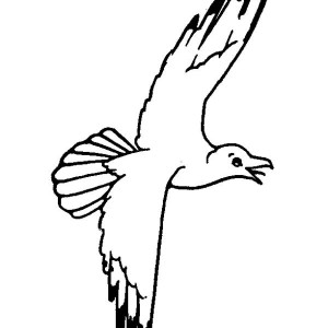 Pose of a Seagull Coloring Page  Kids Play Color