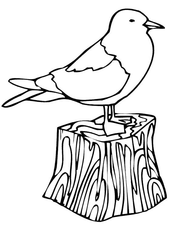Seagull, : Seagull Sleeping Coloring Page
