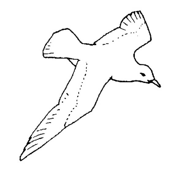 Seagull, : Seagull Spreading Wing Coloring Page