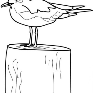 Seagull Coloring Page Seagull Coloring Page  Kids Play Color