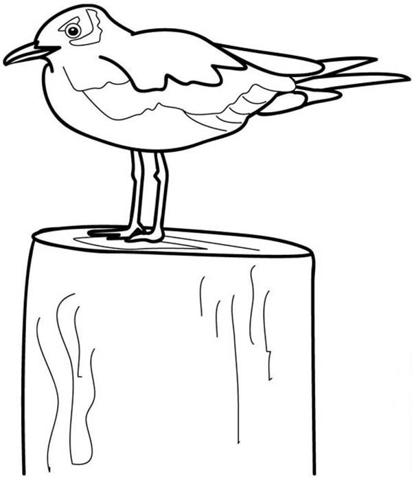 Seagull, : Seagull on a Block Coloring Page