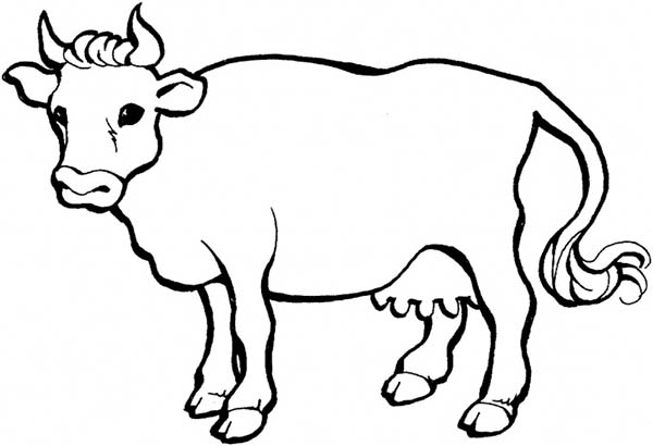 sharp horn milch cow coloring page kids play color
