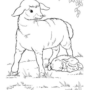 Baby Farm Animal Coloring Pages Goat And Rooster On Page