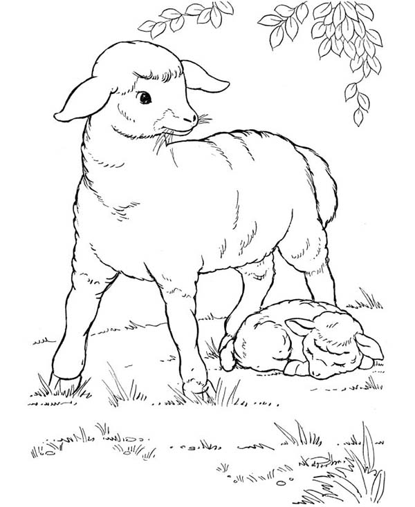 Farm Animal, : Sheep and Her Baby Rest Under the Tree in Farm Animal Coloring Page