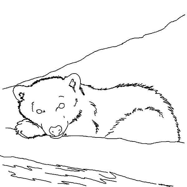 Arctic Animals, : Sleeping Polar Bear in Arctic Animals Coloring Page
