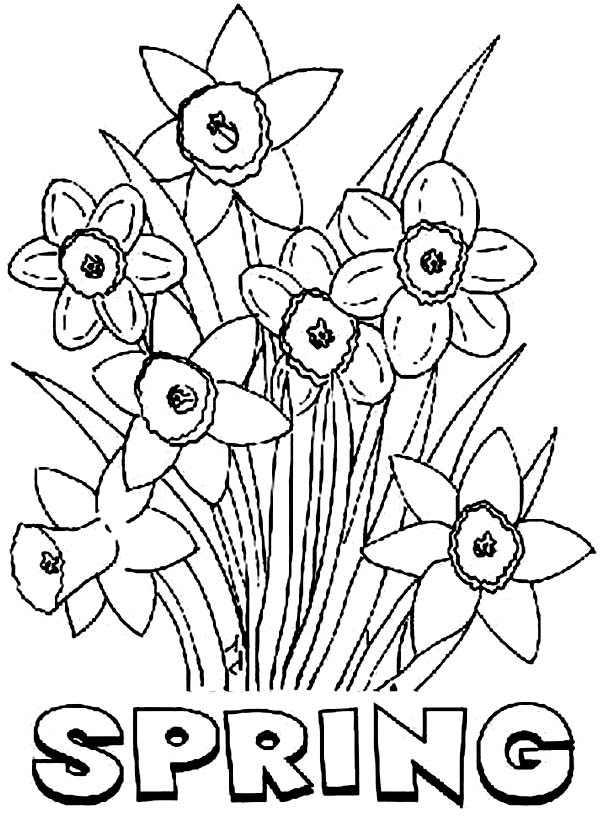 Daffodil, : Spring Flower Daffodil Coloring Page