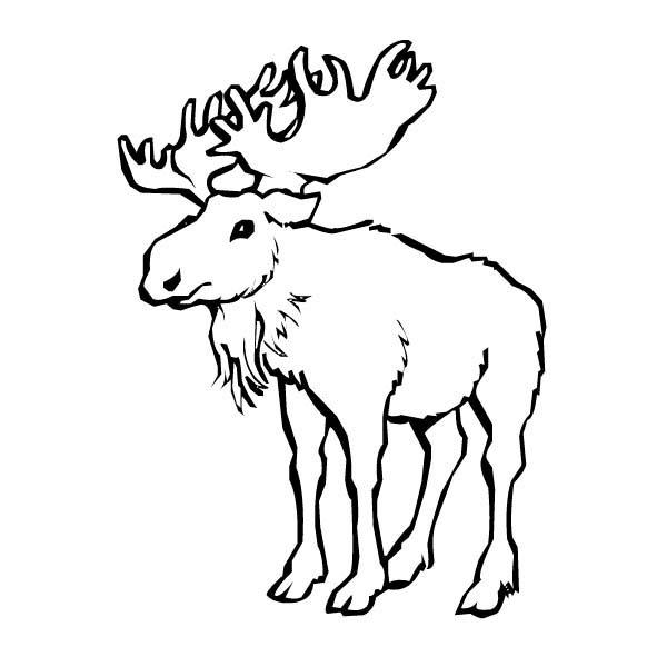 Moose, : Standing Moose Coloring Page