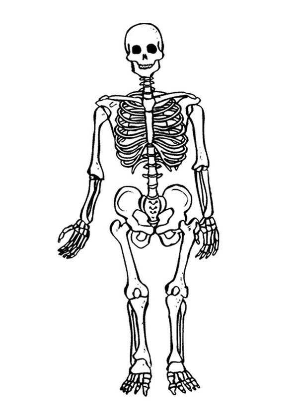 Skeleton, : Terrifying Skeleton Coloring Page