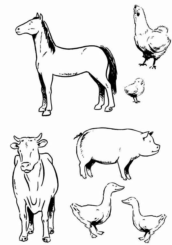 farm animal various type of farm animal coloring page