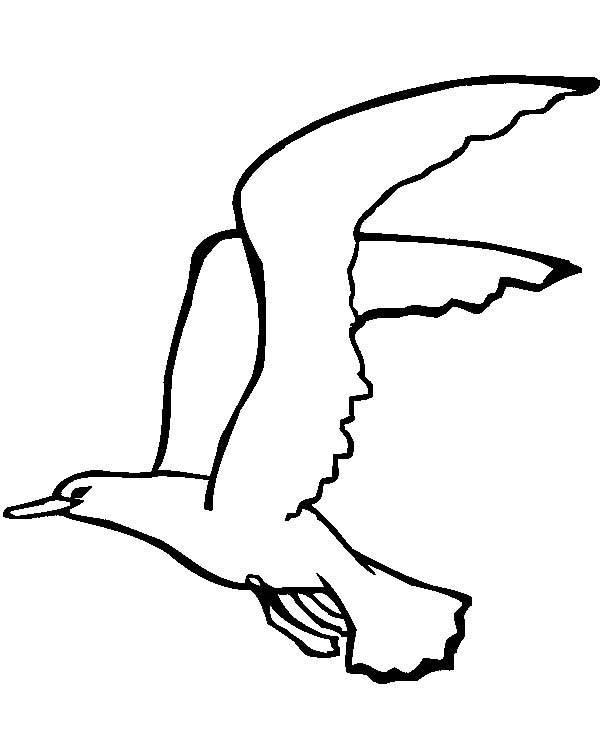 Seagull, : White Headed Seagull Coloring Page