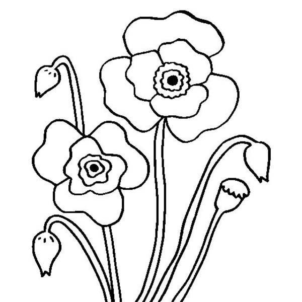 California Poppy, : Wild California Poppy Coloring Page