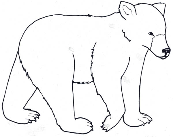 Polar Bear, : Awesome Polar Bear Coloring Page