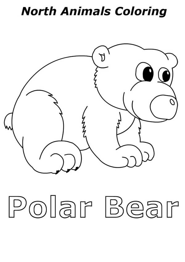 Polar Bear, : Baby North Polar Bear Coloring Page
