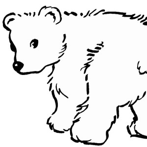 Baby Polar Bear Coloring Coloring Pages