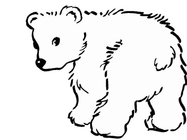Polar Bear, : Baby Polar Bear Coloring Page