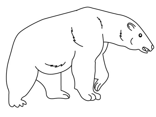 Polar Bear, : Hungry Polar Bear Coloring Page