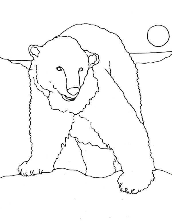 Polar Bear, : Polar Bear Hunt for Food Coloring Page