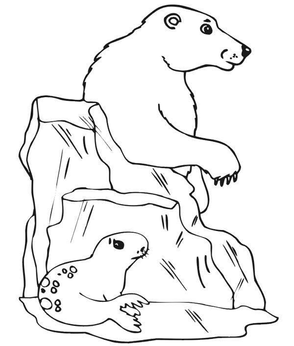 Polar Bear, : Seagull Hiding from Polar Bear Coloring Page