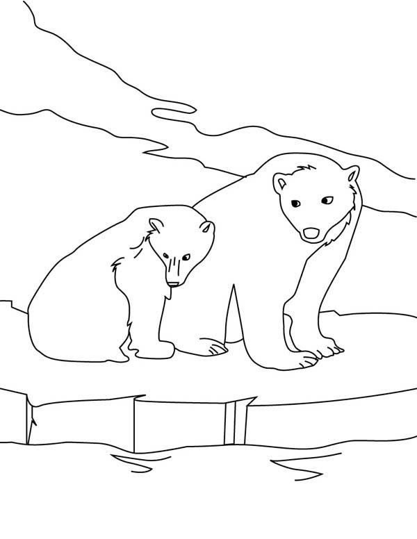 Polar Bear, : Two Polar Bear on Ice Coloring Page