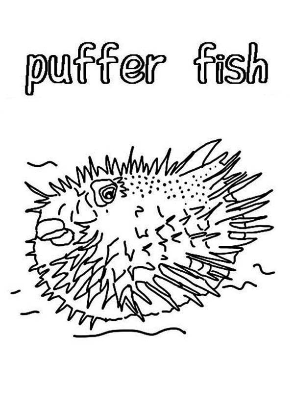 Puffer Fish, : Awesome Puffer Fish Coloring Page