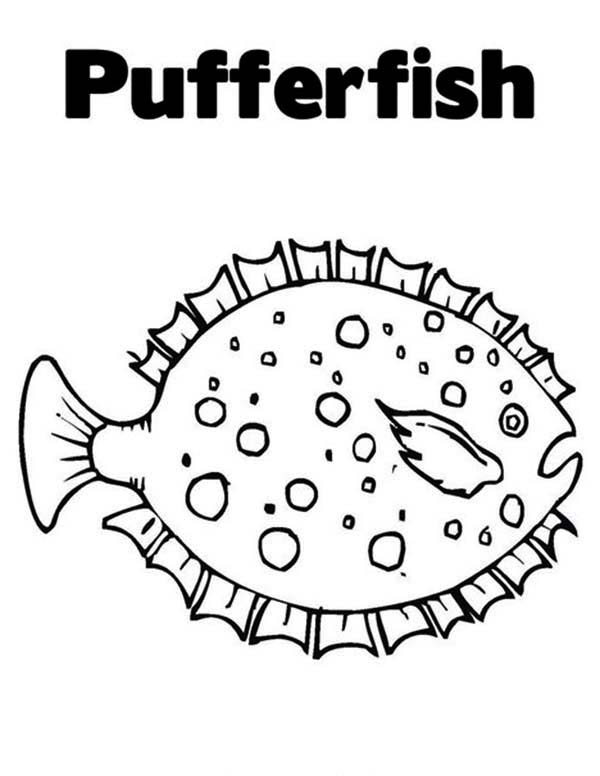 Puffer Fish, : Beautiful White Spotted Puffer Fish Coloring Page